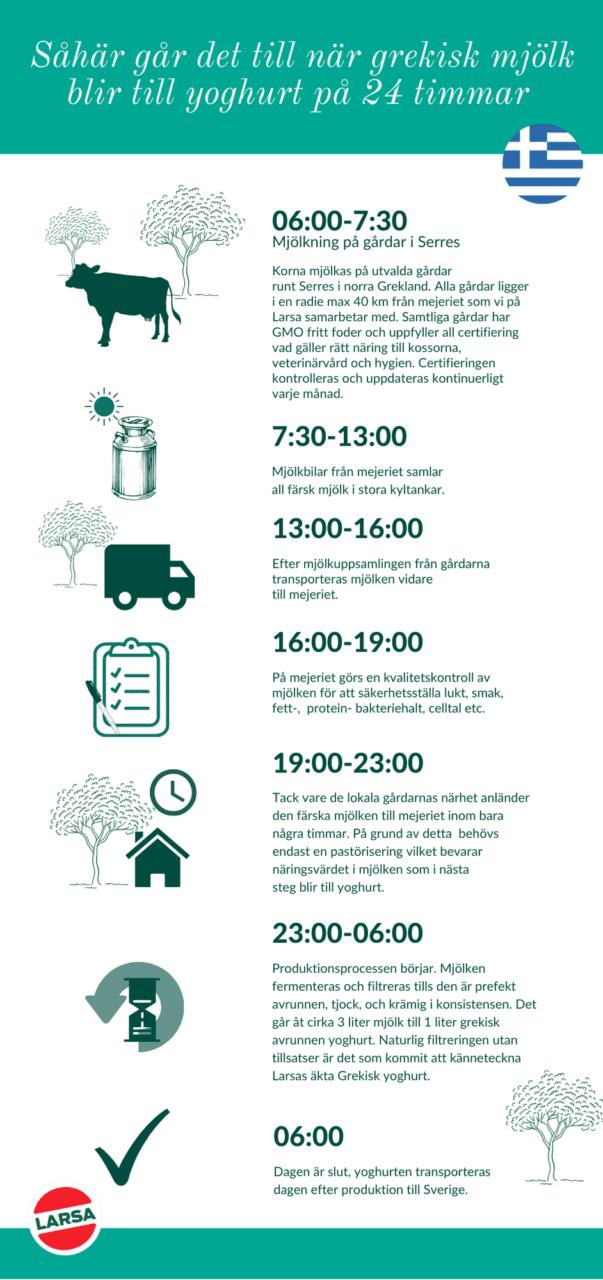 Infografik om hur mjölk blir till Larsa yoghurt